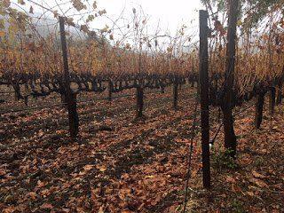 Bonterra vines