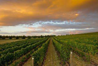 Loess Vineyard, Leonetti Cellar, Walla Walla, Washington