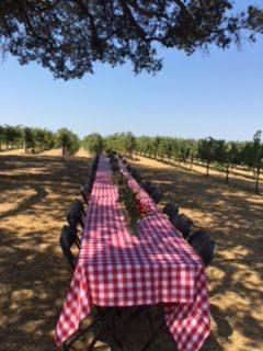 Vineyard lunch at Bokisch Vineyards under the big oak tree