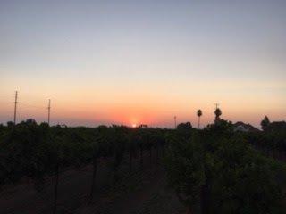 Sunrise harvest in Lodi