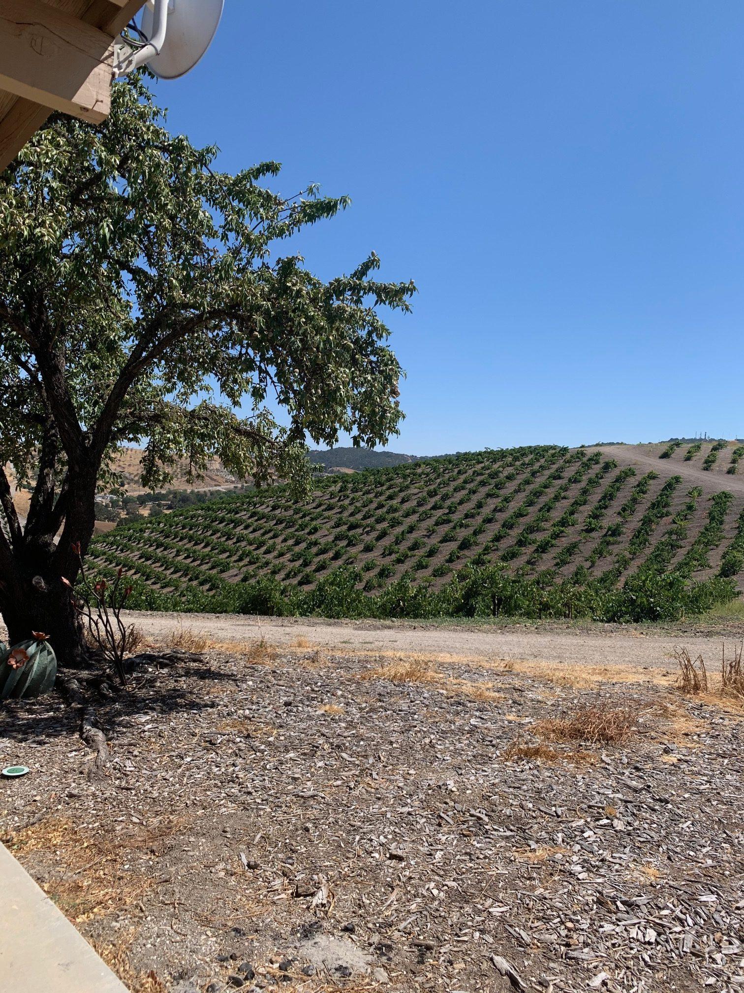 Peachy Canyon Vineyard views